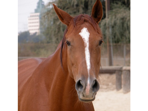 an image of a horse