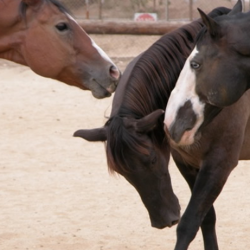 an image of some horses